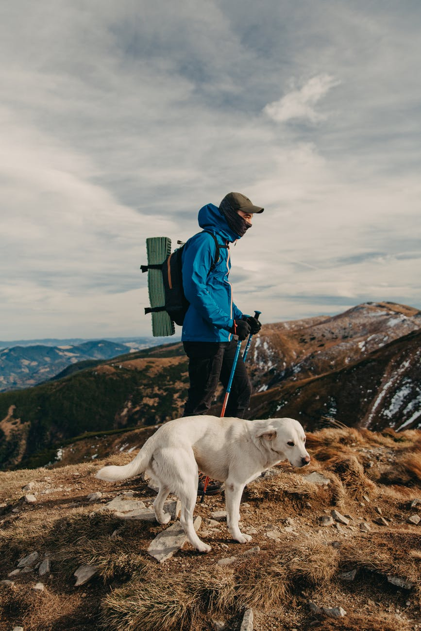 anonymous male hiker standing on mountain peak with purebred dog